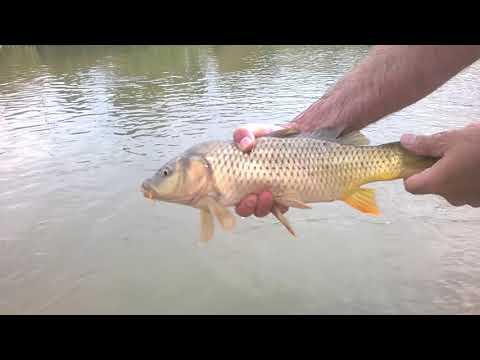 Рыбалка голыми руками. Сам в ШОКЕ !!