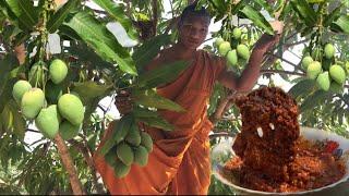 Mjas Chamkar - Sour Mango Picking And Eating Mangoes Chili Salt Delicious   Sweet Mango