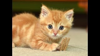 Cute Is Not Enough 😍 Funny Cats and Dogs Videos Compilation 2018 #14