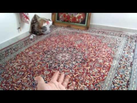 Как живут люди в Иране, их дом и быт