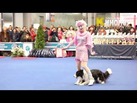 Ordinary magic dog dancing