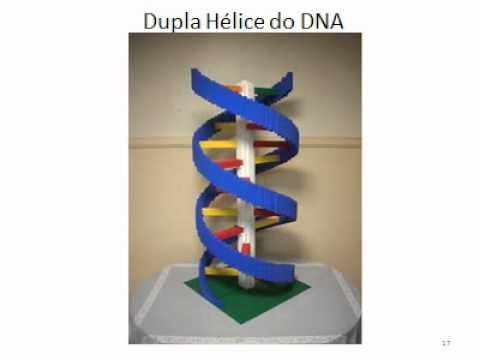dna origami In dna origami, short strands of dna that have a specific sequence of four base pairs are used as staples to tie together long sections of dna to make the skinny dna skeleton stronger and thicker, the strand may loop back on.