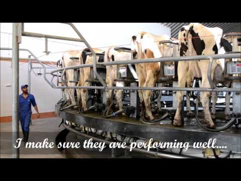 Cattle Dairy farming in India