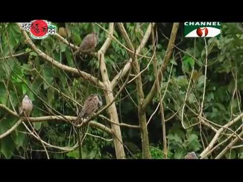 Nature and Life - Episode 119 (Forests of Bangladesh)