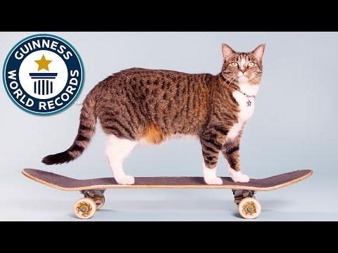 El gato que realiza más trucos en un minuto