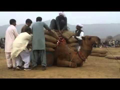 Camel - Wait