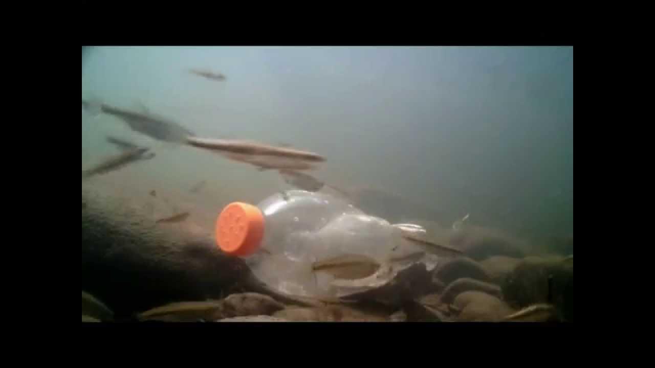 bouteille carafe vairon pi ge poisson minows trap live bait trap underwater gopro. Black Bedroom Furniture Sets. Home Design Ideas