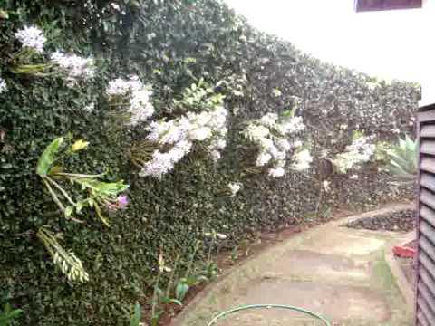 Muro Florido de Orquídeas - Botucatu