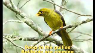 Carol of the Birds : Australian Christmas Carol sung by Bucko & Champs