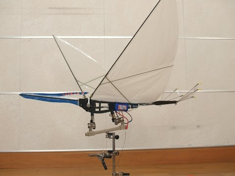 Pteranodon V5-5 in the sky Ornithopter RC Video