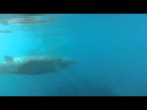 Minke whales in Antarctica