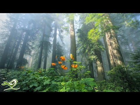 Sunny Mornings | Relaxing Music by Peder B. Helland