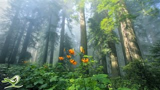 """Beautiful Relaxing Music: """"Sunny Mornings"""" by Peder B. Helland (Official Video)"""