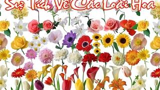 Truyện cổ tích về các loài hoa: Hoa Hồng, Hoa Đào, Hoa Mai - Truyện cổ tích
