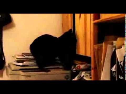 Код юмора  - смешные кошки