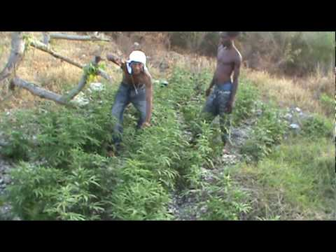 Ganja-high-grade On The Hill, Orange Hill Jamaica  2010.!..mpg video
