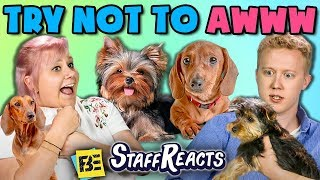 Download Lagu TRY NOT TO AWWW CHALLENGE w/ REAL PUPPIES!! (ft. FBE Staff) Gratis STAFABAND