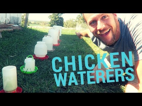 The Best Chicken Waterers