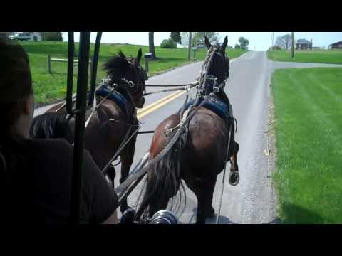 Ed's Buggy Rides in Amish Country, Pa..mp4
