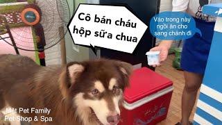 Mật xin 10k sang hàng xóm mua sữa chua về ăn - thánh dễ thương^^