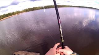 что ловят в лемболовском озере