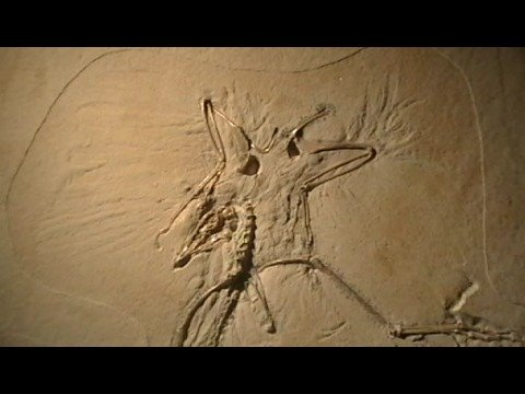 Archaeopteryx Fossil, Thermopolis Specimen Video