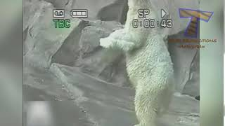 Download Tubidy io Crazy Funny ANIMAL videos LAUGH and ENTERTAINMENT for EVER 3Gp Mp4