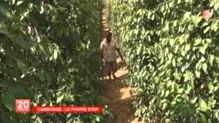 france2 - reportage sur le poivre de kampot - nov 2013