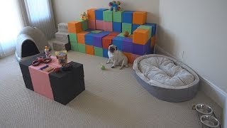 SURPRISING MY DOG WITH HIS DREAM HOUSE!! (INSANE)