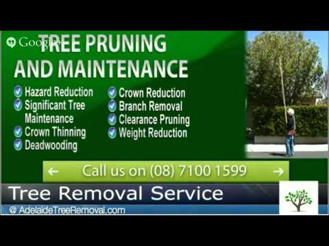 Stump Removal Adelaide - Call AdelaideTreeRemovalcom on 08 7100 1599