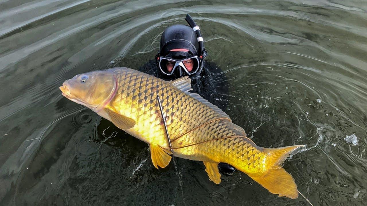 Сколько Рыбы и Раков в Каспийском Море