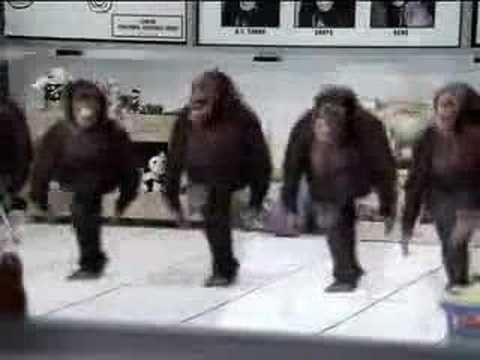 Monkeys River Dancing River Dance Monkeys Remix