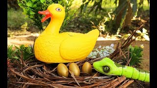 Duck lay an egg & The snake stole the egg - Videos for Children Fishing for Kids