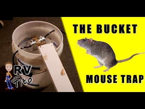 The Best Mouse Trap The Bucket Trap Youtube