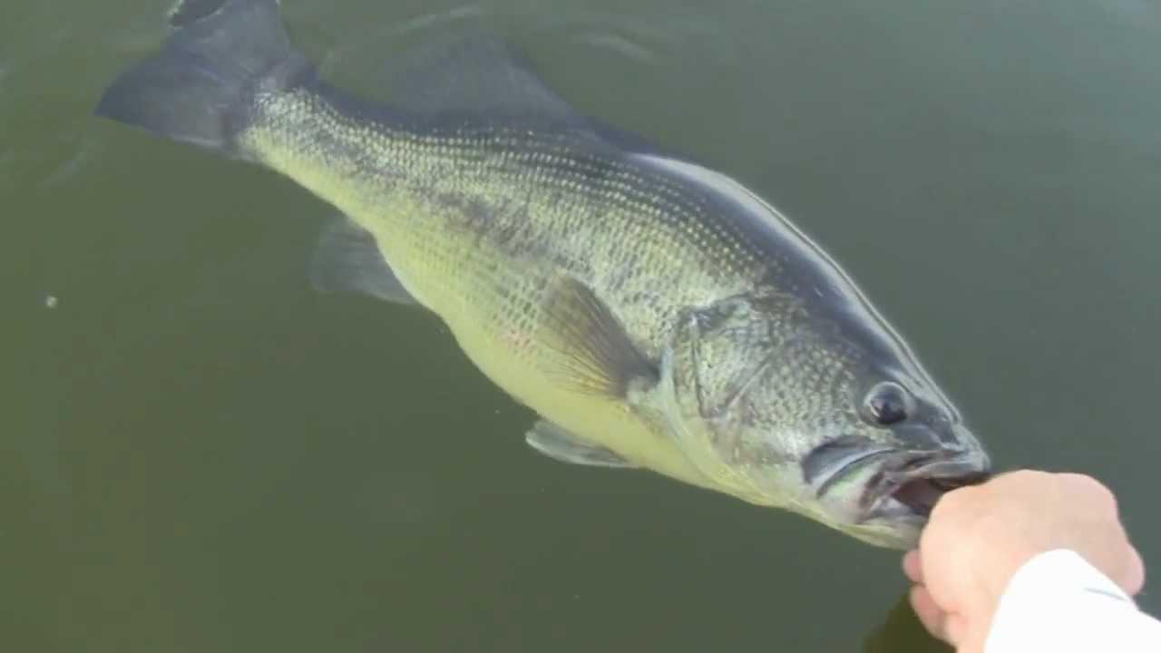 Carolina rig bass tips how to fish a carolina rig in the for Bass fishing tips
