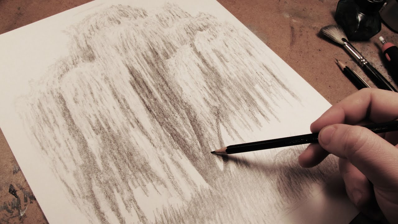 Old Willow Tree Drawing How to Draw a Weeping Willow