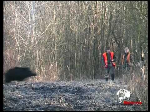 Lov černé zvěře - sestřih