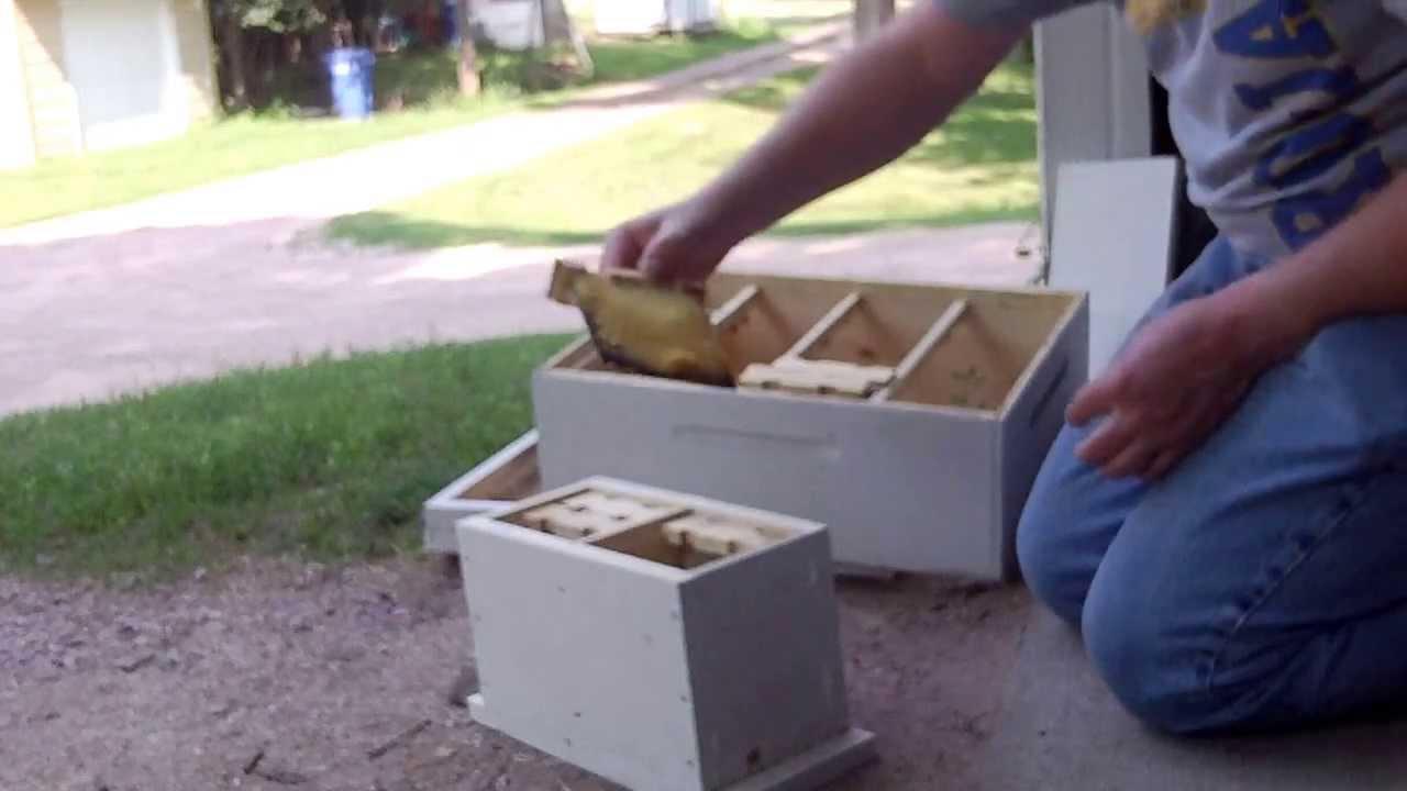 Honey Bee Queen Mini Mating Nucs Update YouTube