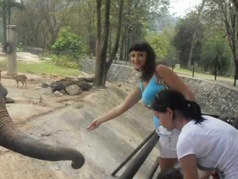 А вы знаете, что едят слоны???