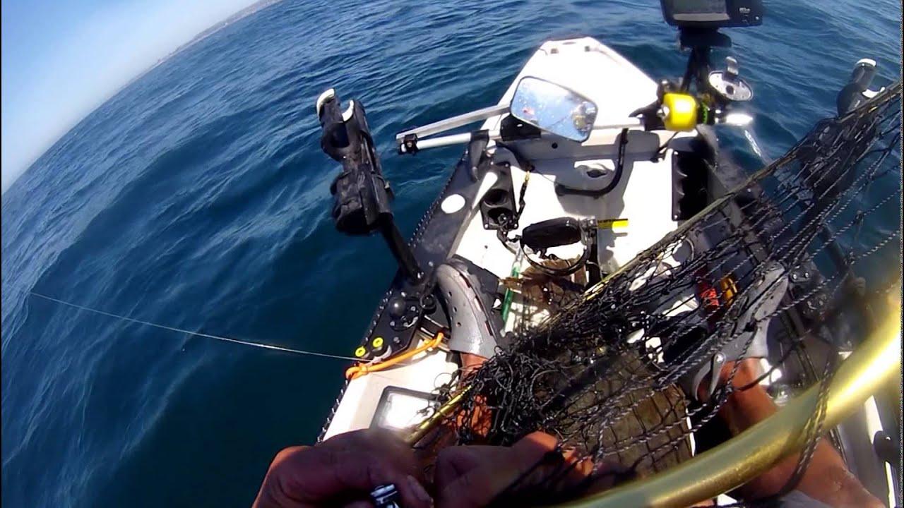 Kayak fishing for santa cruz halibut fishing media for Santa cruz fishing