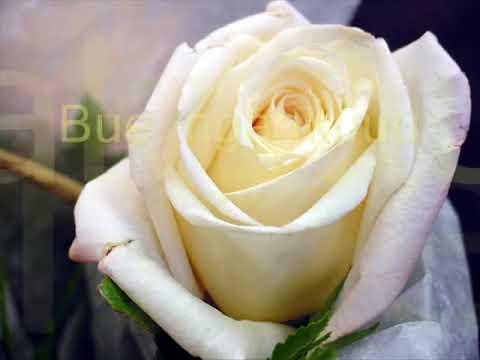 Iwan Fals - Bunga Trotoar