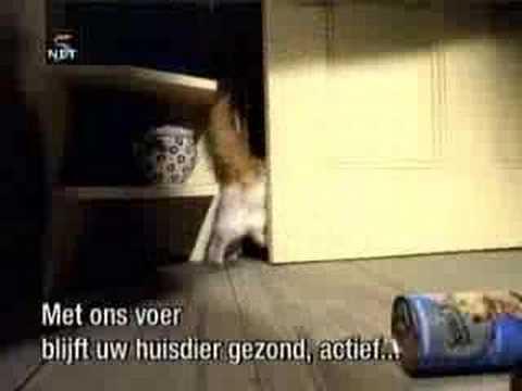 犬と猫がタッグを組み、泥棒を撃退!その方法とは?!
