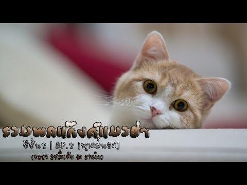 รวมพลแก๊งค์แมวฮ่า   ซีซั่น2   EP.2 [พากย์นรก]