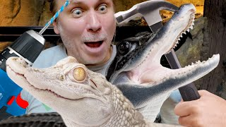 BUILDING MY ALBINO ALLIGATOR A NEW HABITAT!! | BRIAN BARCZYK
