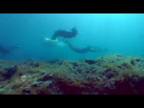Divers for the Oceans / Sea Shepherd Conservation Society