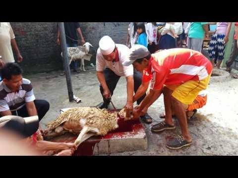 Potong sapi di ar rahman 2016