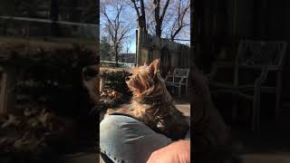 Funny Howling dog