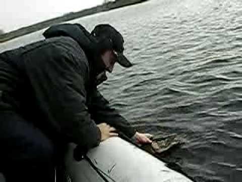 клев рыбы в нижегородской области горьковское море