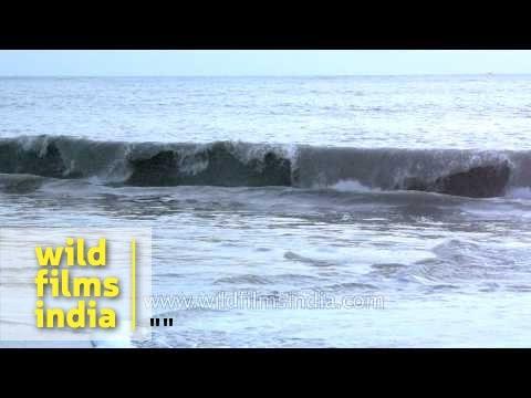 Alappuzha Beach - Kerala