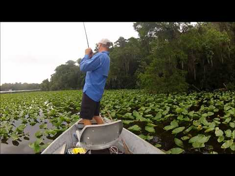 June 9, 2012 2 lbs. Bass St. Johns River.wmv